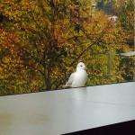 Tierische Zuschauerin am Fenster des Kongressraums im Verkehrshaus Luzern.